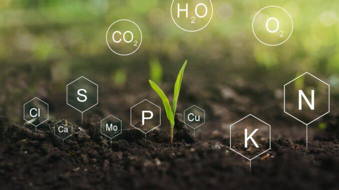 Quanto è importante il fosforo nelle piante
