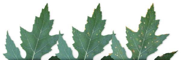 Quanto è importante il magnesio nelle piante